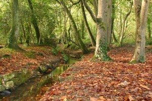 Tehidy Woods in autumn, a walk through the woods is a great opportunity for wildlife activities in Cornwall. www.carbisbayholidays.co.uk