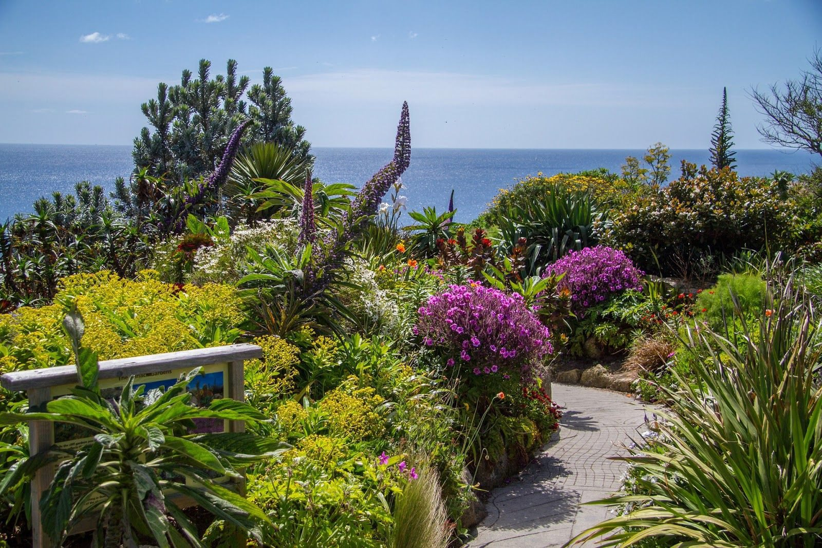 Seaview of a garden in St Ives covered with flowers