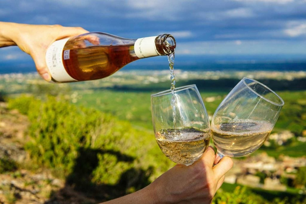 Camel Valley Vineyard, Cornwall, Uncorking Cornwall's Wine Culture