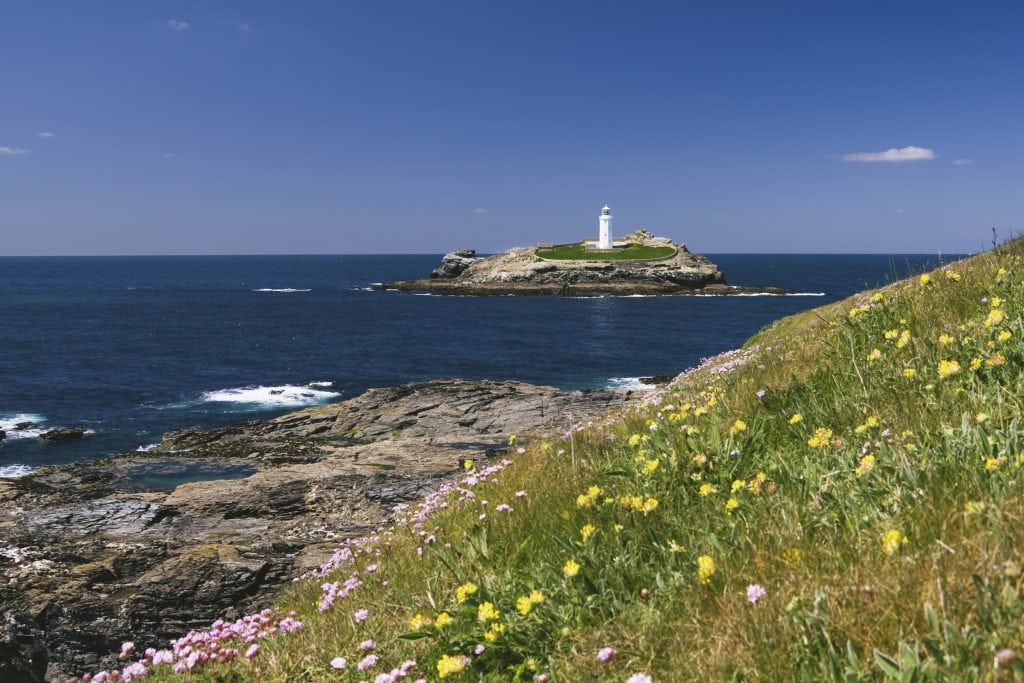 Godrevy Lighthouse and wild flowers taken from south west coastal walking path.
