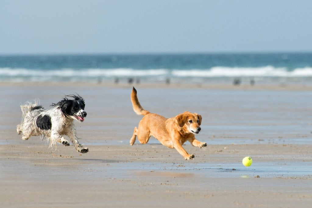 St Ives Self Catering Property, Dog Friendly