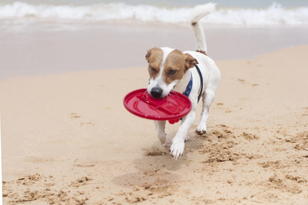 Dog Friendly Pubs St Ives, Dog Playing on Beach