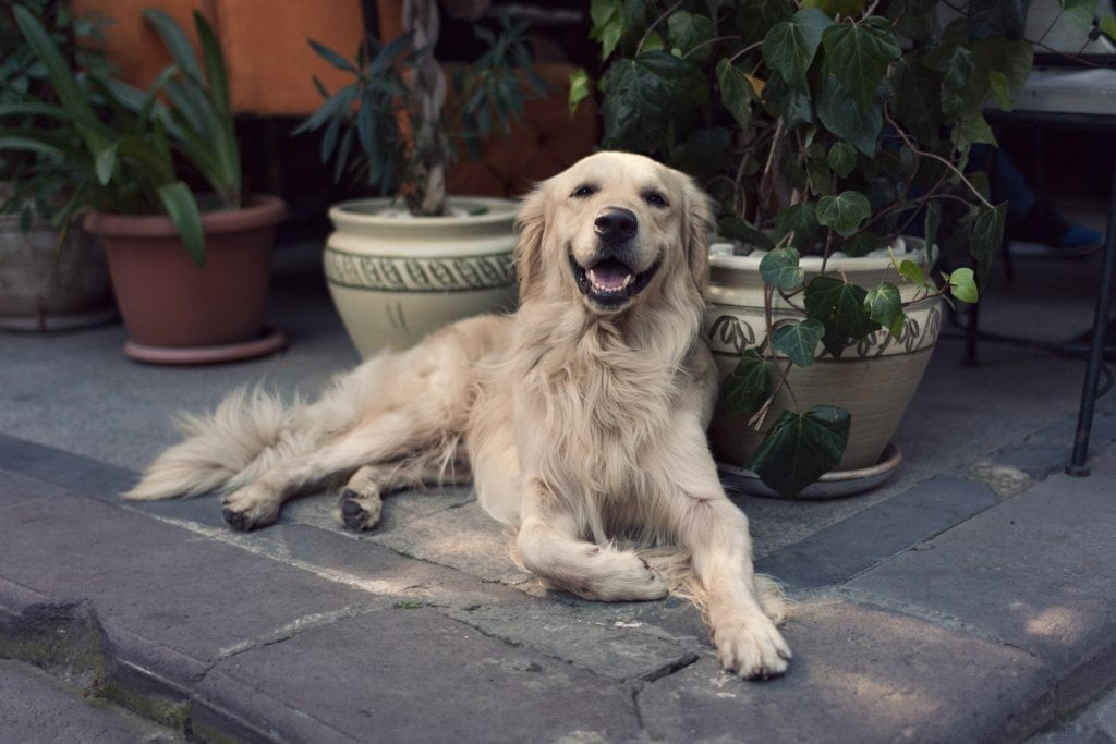 Dog Friendly Pubs St Ives, Beer Garden