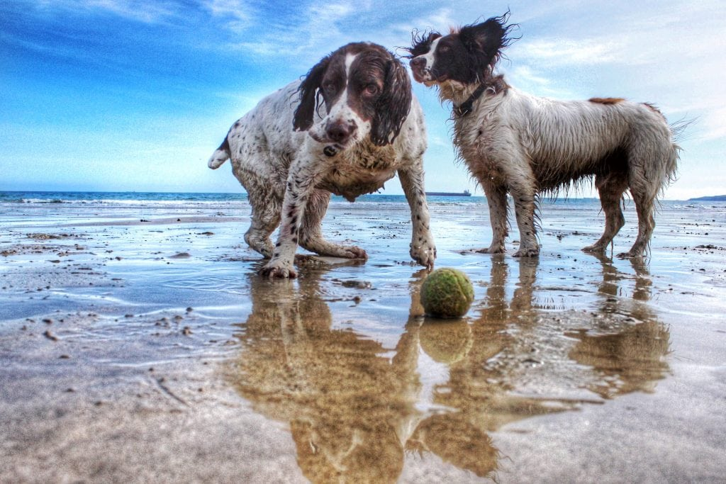 Dog Friendly Pubs St Ives, Dogs Playing on Beach