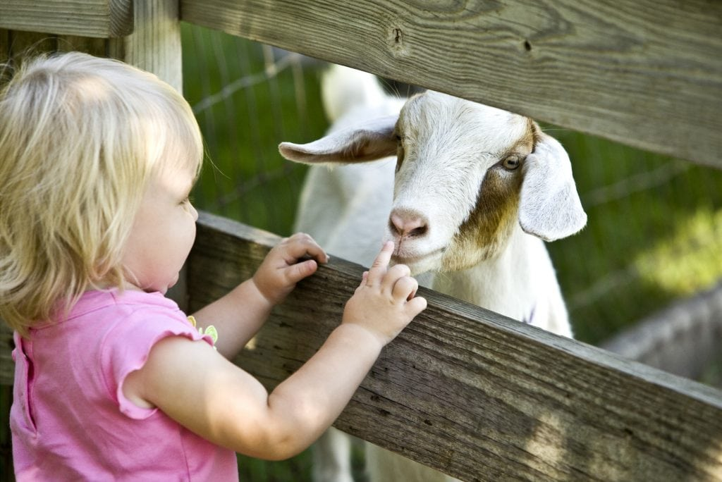 Family Holidays In Cornwall, Farm Animals