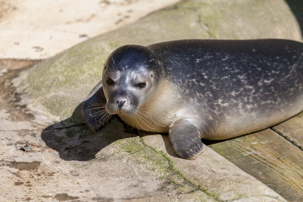 Things to do in Cornwall with Toddlers, Seal Sanctuary