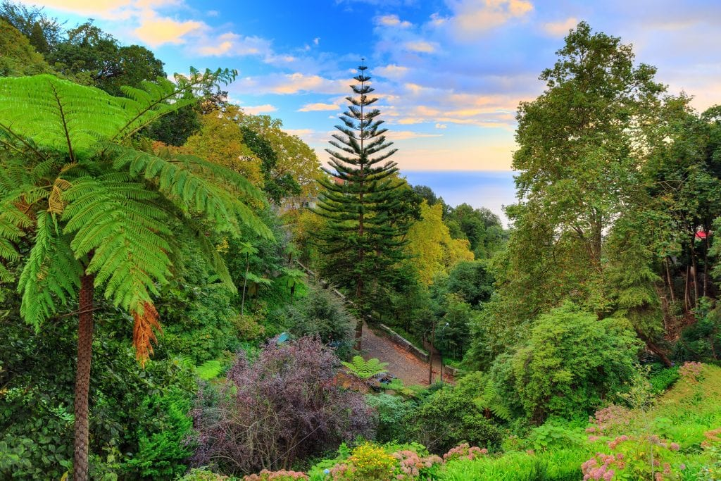 Beautiful view of botanical gardens with the sea in the background, tall trees and a little path.