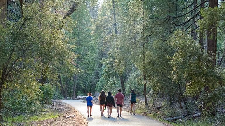 Walks in Cornwall - Family in woods